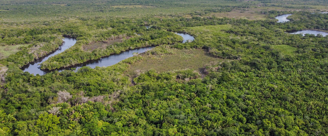 Providing access to large scale, high quality forest carbon credits