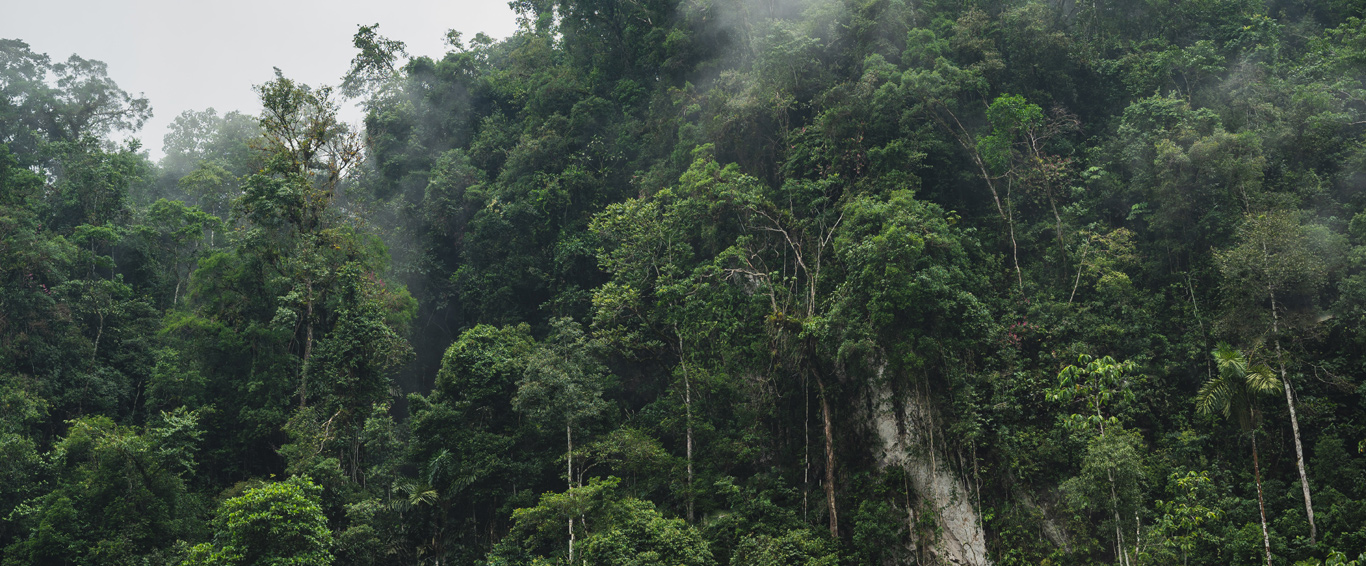 Protecting tropical forests for all their climate, economic, ecological and cultural benefits