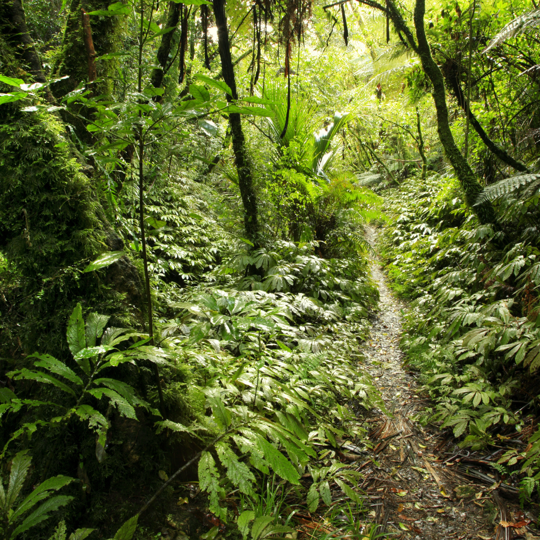 Amazon and Nestle join public-private plan to save world's forests
