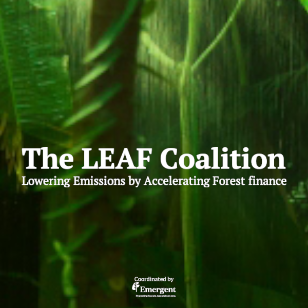 Delta Air Lines and PwC join the LEAF Coalition